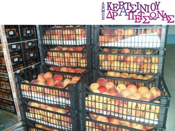 Δωρεάν διανομή φρούτων στους δικαιούχους κάρτας σίτισης